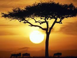 proverbio-africano